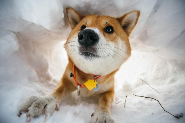 11_20150201_snow_walk_central_park_078-