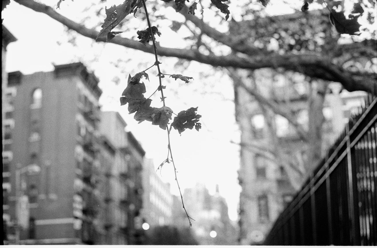 Flores_151023_11